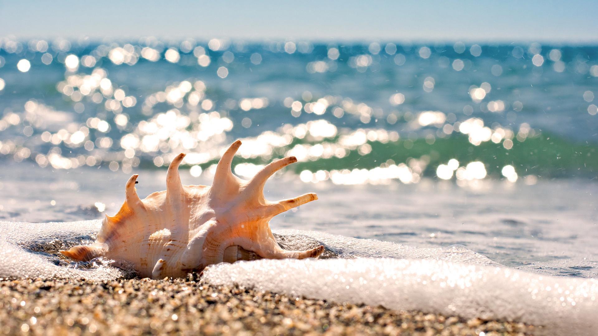 Darlene's Shells